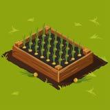 Το κιβώτιο φυτικών κήπων με τα κρεμμύδια έθεσε 11 Στοκ Φωτογραφίες