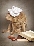 Το κινεζικό σκυλί sharpei διαβάζει το βιβλίο Στοκ εικόνα με δικαίωμα ελεύθερης χρήσης