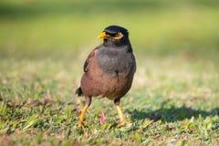 Το κοινό πουλί αγιοπουλιών Στοκ φωτογραφία με δικαίωμα ελεύθερης χρήσης