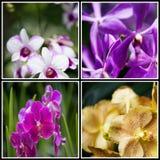 Το κολάζ των διάφορων λουλουδιών στην έννοια φύσης Στοκ Εικόνες