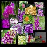 Το κολάζ των διάφορων λουλουδιών στην έννοια φύσης Στοκ φωτογραφία με δικαίωμα ελεύθερης χρήσης
