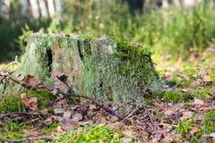 Το κολόβωμα βλέπει στο δάσος Στοκ φωτογραφία με δικαίωμα ελεύθερης χρήσης