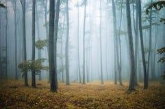 το κομψό δάσος βγάζει φύλλα τα πορτοκαλιά δέντρα Στοκ εικόνα με δικαίωμα ελεύθερης χρήσης
