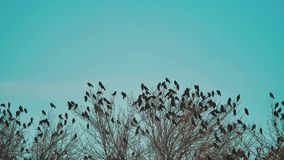 Το κοπάδι των πουλιών λαλά το φθινόπωρο μπλε ουρανού που απογειώνεται από ένα δέντρο ένα κοπάδι ξηρού δέντρου τρόπου ζωής πουλιών φιλμ μικρού μήκους