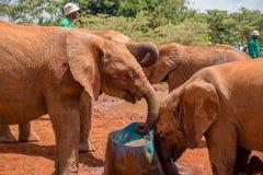 Το κοπάδι το πόσιμο νερό ελεφάντων μωρών στοκ εικόνες