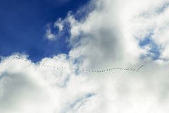 Το κοπάδι των πουλιών στο μπλε ουρανό Στοκ φωτογραφία με δικαίωμα ελεύθερης χρήσης