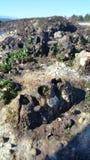 Το κοράλλι επέλεξε την εστίαση Στοκ Εικόνα