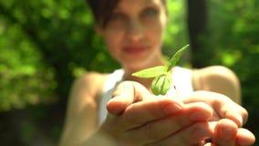 Το κορίτσι άντεξε τη χούφτα του χώματος με λίγες πράσινες εγκαταστάσεις απόθεμα βίντεο