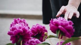 Το κορίτσι αγγίζει τα χέρια της και ρουθουνίζει τα πολύ όμορφα φωτεινά λουλούδια στο πάρκο συμπαθητικά χρώματα t φιλμ μικρού μήκους