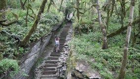 Το κορίτσι αναρριχείται στα σκαλοπάτια στο τροπικό δάσος απόθεμα βίντεο