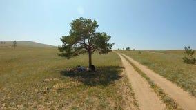 Το κορίτσι βρίσκεται κάτω από ένα μόνο δέντρο και σύρει ένα τοπίο στον τομέα φιλμ μικρού μήκους