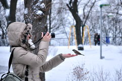Το κορίτσι, γυναίκα, φωτογράφος ταΐζει το σπουργίτι στοκ εικόνα