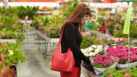Το κορίτσι επιλέγει τα λουλούδια στο κατάστημα απόθεμα βίντεο