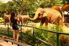 Το κορίτσι εφήβων τουριστών κάνει τη φωτογραφία των elehpants Στοκ Εικόνες