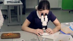 Το κορίτσι δημοτικών σχολείων που μελετά το δείγμα κάτω από το μικροσκόπιο 4K απόθεμα βίντεο