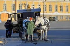Το κορίτσι θεραπεύει το καρότο-συρμένο άσπρο άλογο μεταφορών στο squa παλατιών Στοκ Εικόνα