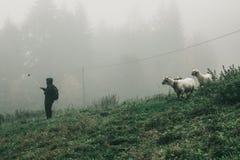 Το κορίτσι κάνει selfie με τα πρόβατα βουνών Στοκ Εικόνες