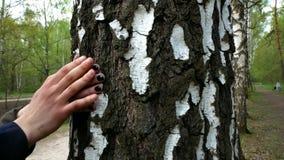 Το κορίτσι και ο τύπος κτυπιούνται από τον κορμό ενός δέντρου απόθεμα βίντεο