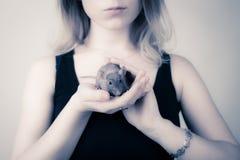 Το κορίτσι κρατά έναν αρουραίο στα χέρια της Ο αρουραίος εξετάζει τη κάμερα Στοκ Εικόνες