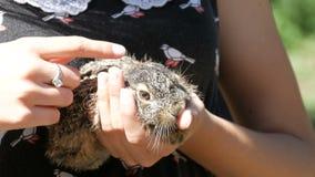 Το κορίτσι κρατά έναν μικρό άγριο λαγό στα χέρια της φιλμ μικρού μήκους