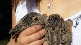 Το κορίτσι κρατά ένα μικρό άγριο χνουδωτό λαγουδάκι μωρών Λίγο λαγουδάκι στο φοίνικα κίνηση αργή φιλμ μικρού μήκους