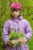 Το κορίτσι κρατά υπό εξέταση ένα καλάθι με το σπορόφυτο μαργαριτών Στοκ Φωτογραφία