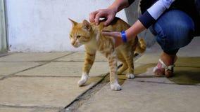 Το κορίτσι κτυπά μια άστεγη κόκκινη αιγυπτιακή γάτα στην οδό απόθεμα βίντεο