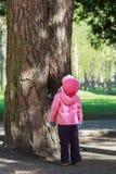 Το κορίτσι μικρών παιδιών φαίνεται υψηλό μέχρι το μεγάλο παλαιό πεύκο Στοκ Φωτογραφίες