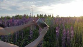 Το κορίτσι παίρνει μια φωτογραφία των λουλουδιών από το τηλέφωνό της lupine φιλμ μικρού μήκους
