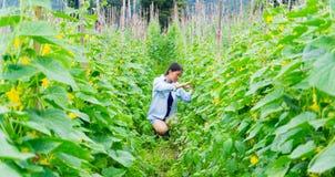 Το κορίτσι περπατά για να ελέγξει την παραγωγή των αγγουριών Gar πεπονιών Στοκ Φωτογραφία