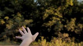 Το κορίτσι πιάνει τον αέρα από το παράθυρο αυτοκινήτων απόθεμα βίντεο