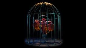Το κορίτσι σε ένα κλουβί εκτελεί τις διαφορετικές μετακινήσεις με τα χέρια της που είναι όπως ένα πουλί Μαύρη ανασκόπηση απόθεμα βίντεο