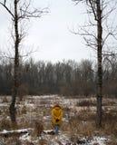 Το κορίτσι στα ξύλα θέτει Στοκ εικόνες με δικαίωμα ελεύθερης χρήσης