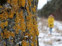 Το κορίτσι στα ξύλα θέτει Στοκ Φωτογραφία