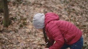 Το κορίτσι συλλέγει snowdrops απόθεμα βίντεο