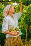 Το κορίτσι συλλέγει τα φρούτα Στοκ Φωτογραφίες