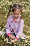 Το κορίτσι συλλέγει chamomile Στοκ εικόνες με δικαίωμα ελεύθερης χρήσης