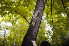 Το κορίτσι ταΐζει έναν σκίουρο στοκ φωτογραφία με δικαίωμα ελεύθερης χρήσης