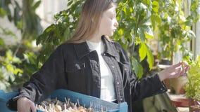 Το κορίτσι χωρών που ελέγχει την νέα γυναίκα συγκομιδών που κρατά το κιβώτιο με το σκόρδο και το κρεμμύδι στα χέρια Ο θηλυκός αγρ φιλμ μικρού μήκους