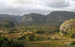 Το κουβανικό αγρόκτημα στοκ φωτογραφία με δικαίωμα ελεύθερης χρήσης