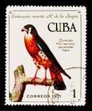 Το κουβανικό γραμματόσημο παρουσιάζει αμερικανικό sparverius FALCO γεράκι, 100η επέτειος του θανάτου του Ρ Λα Sagra de serie, cir Στοκ Εικόνες