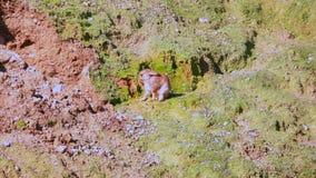 Το κουνέλι στην πράσινη κλίση τρίβει τα πόδια του και φαγουρίζει απόθεμα βίντεο