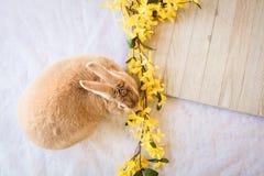 Το κουνέλι λαγουδάκι με το κίτρινο forsythia ανθίζει και ξύλινος πίνακας με το δωμάτιο για το αντίγραφο Στοκ εικόνα με δικαίωμα ελεύθερης χρήσης
