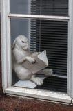 Το κουνέλι διαβάζει στο παράθυρο Στοκ εικόνα με δικαίωμα ελεύθερης χρήσης
