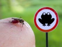 Το κουνούπι απορροφά το αίμα από το ανθρώπινο δέρμα στο υπόβαθρο του σημαδιού είναι επικίνδυνος βάτραχος στοκ φωτογραφία με δικαίωμα ελεύθερης χρήσης