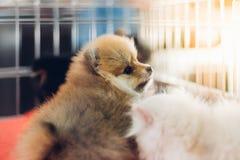 Το κουτάβι περιμένει στο κλουβί σκυλιών με την ελπίδα καταστημάτων κατοικίδιων ζώων στην ελευθερία στοκ φωτογραφίες με δικαίωμα ελεύθερης χρήσης