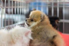 Το κουτάβι περιμένει στο κλουβί σκυλιών με την ελπίδα καταστημάτων κατοικίδιων ζώων στην ελευθερία στοκ φωτογραφία