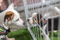 Το κουτάβι περιμένει στο κλουβί σκυλιών με την ελπίδα καταστημάτων κατοικίδιων ζώων στην ελευθερία στοκ φωτογραφία με δικαίωμα ελεύθερης χρήσης