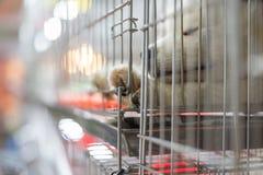 Το κουτάβι περιμένει στο κλουβί σκυλιών με την ελπίδα καταστημάτων κατοικίδιων ζώων στην ελευθερία στοκ εικόνες