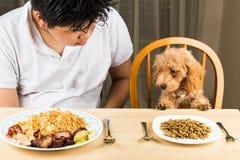 Το κουτάβι που το πιάτο του ρυζιού και του κρέατος σε ένα πιάτο εφήβων και παρουσιάζει ότι κανένα ενδιαφέρον στο πιάτο της kibble Στοκ Φωτογραφίες